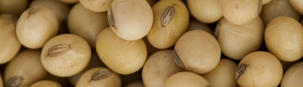 Bob Pehrson Seeds