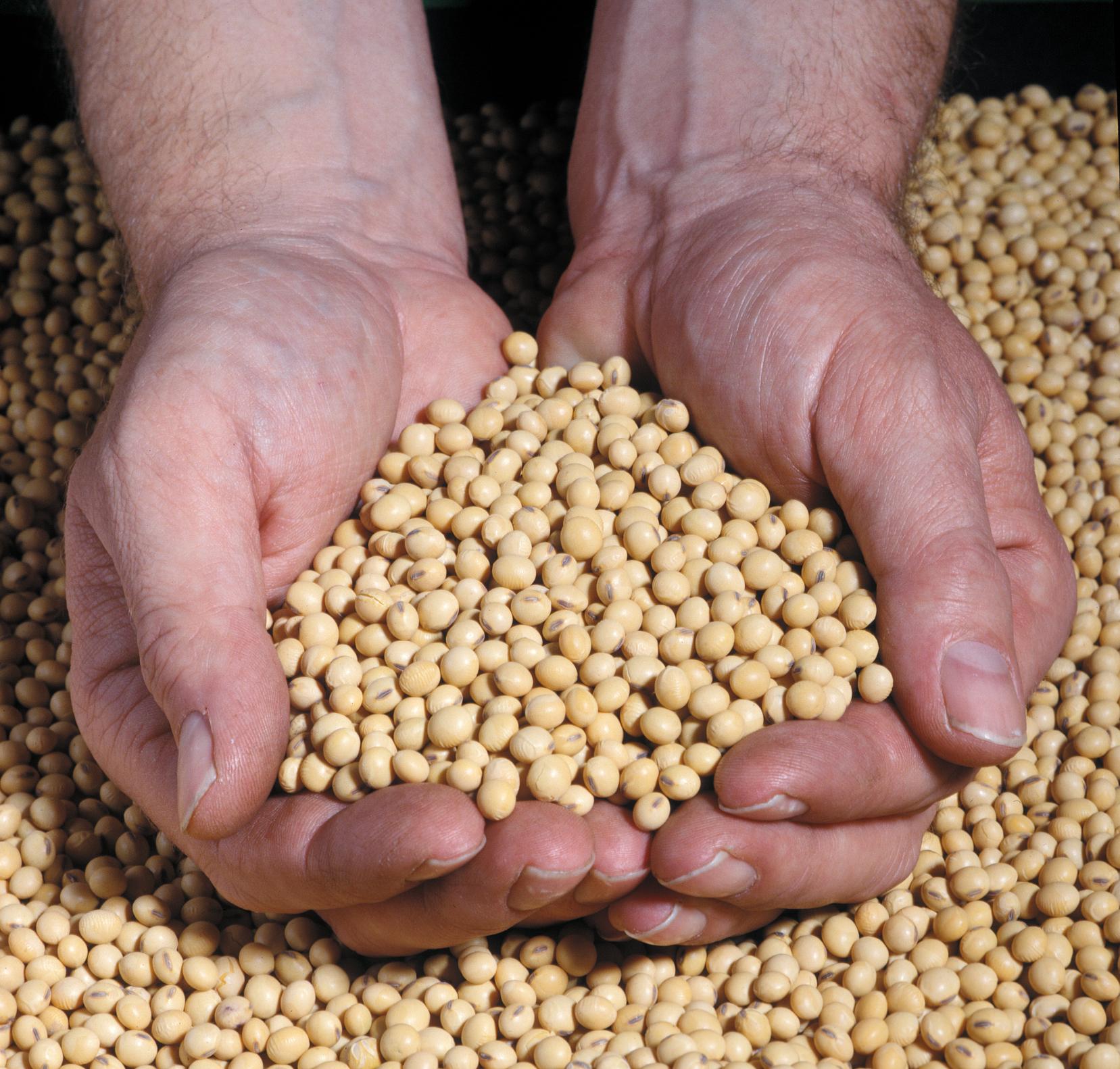 Syngenta® Seeds | Bob Pehrson Seeds